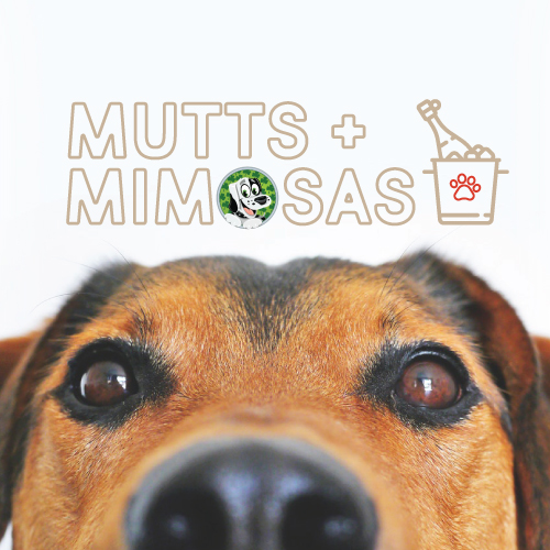 Mutts+Mimosas-KOs-Charity-Event-Lucky-Dog-Rescue - K O'Donnell's